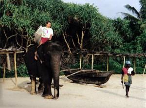 Surfer auf Elefant
