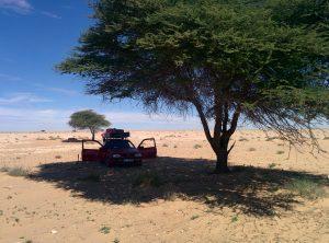 Pause unter Schattenbaum